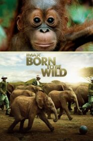 Born to Be Wild Online Lektor PL FULL HD